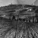 Italie : trois vignerons, trois engagements
