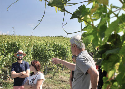 Introduction in-situ à la biodynamie en viticulture